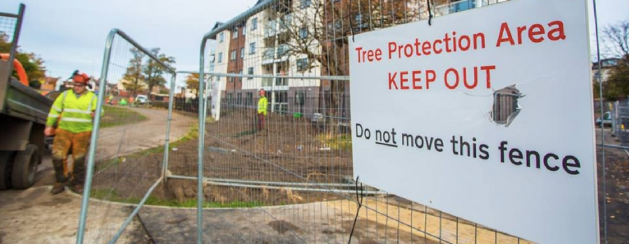 Anger as trees felled at controversial new social housing scheme