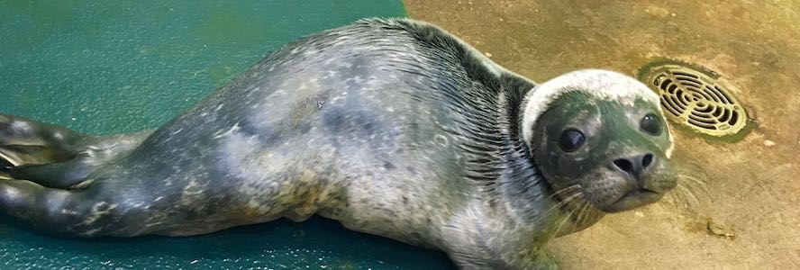 Seal pup recovering