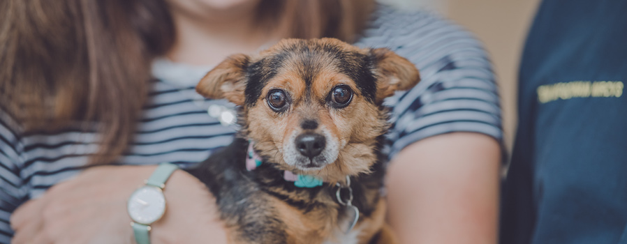 Tiny will be guest of honour at vet surgery open day