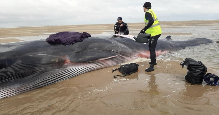 Rescue operation saves beached whale