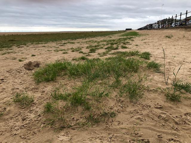 Grass on Hoylake beach