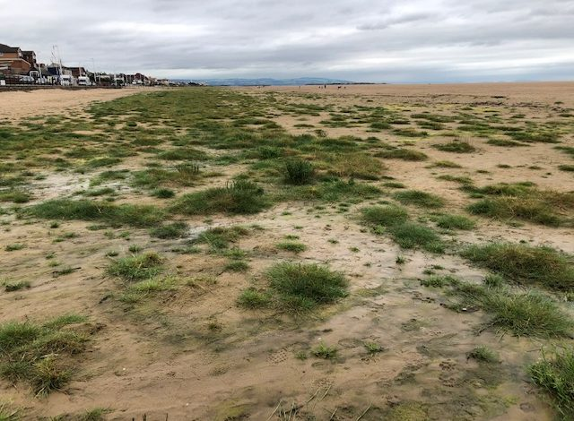 Hoylake beach maintenance decision to be debated